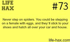 Why you should never step on a spider -LIFE HAX