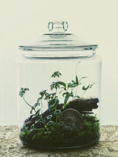terrariums | Tumblr