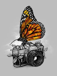 Monarch butterfly on old 35mm camera - drawing / sketch / painting