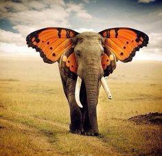Elephant Spirit Animal, Elephant Love, Elephant Art, Animals And Pets, Baby Animals, Funny Animals, Cute Animals, Weird Creatures, Mythical Creatures