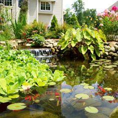 Imagine having this in your yard this summer! #watergarden #backyardpond #koipond