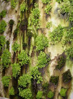 Micro vegetation