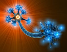 Brain Doesnt Produce New Neurons After Age 13 Ayurveda, Complementary Alternative Medicine, Spirit Science, Nerve Pain, Primary Care, Neurology, Neuroscience, Natural Treatments, Natural Remedies