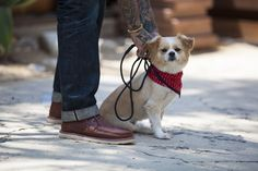 How We Wear Them: Puppy love and Searcher Boots.