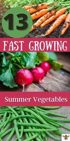 Want easy, fast growing vegetables to grow at home? I've got a list of 13 fast growing summer vegetables that you can plant and harvest in no time! #easyfastvegetables Easy To Grow Vegetables, Growing Vegetables From Seeds, List Of Vegetables, Planting Vegetables, Growing Herbs, Vegetable Garden For Beginners, Gardening For Beginners, Garden Tips, Garden Projects