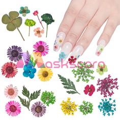 Can Be set with Maskscara's Gel-iT Builder Gel or Acrylic Systems. Nail Decorations, Uv Gel, Beauty Nails, Dried Flowers, Decals, Sticker, Nail Art, Gel Nails, Floral