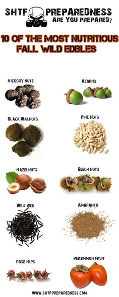 10 of the Most Nutritious Fall Wild Edibles 1. Hickory 2. Black Walnut 3. Pine…