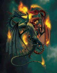 Dragons fighting