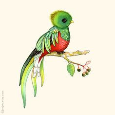Q is for quetzal by JooJoo