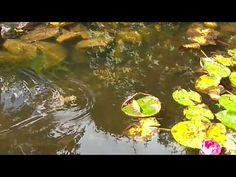 Frosch vs. Spinne
