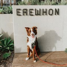 Emisha CBD is now available at ALL Erewhon Market locations! Pick up our organic #PetCBD teats next time you're there. #PetHealth #DogHealth #CBDforPets www.EmishaWellness.com Happy Animals, Pet Health, Dog Treats, Organic, Marketing, Pets, Doggie Treats