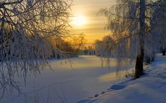 A Swedish forest in the winter sun | Find your dream winter season travel job: www.traveljobsearch.com/jobs