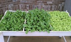 The salad table experiment. Excellent for kitchen gardening, great for greens, radishes lettuce, herbs and any other shallow rooted plants. Easy to build. 2X4 construction and door screen bottoms.