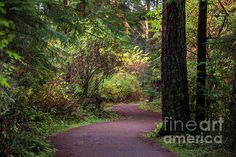 Path through the Stanley Park in Vancouver BC, Canada Stanley Park, Walking In Nature, Pathways, Vancouver, Scenery, Environment, Country Roads, Canada, America