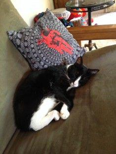 les plus beaux chats en photos 231 sur http://ift.tt/1oohFRS