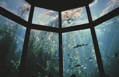 monterey bay aquariu