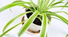 7 Houseplants for Clean Air