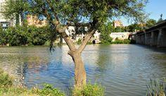 Pisuerga Puente Mayor #Valladolid