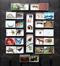 Zwierzęta i ich domy