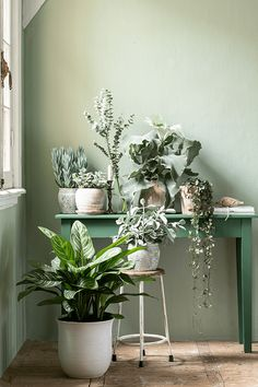 Student Room, Slow Living, First Home, Planting Flowers, Sweet Home, Pastel, Make It Yourself, Green, Plants