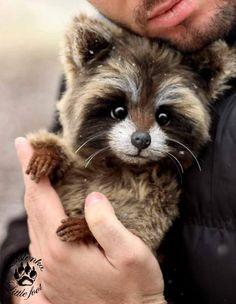Baby Raccoon By Evgeniya and Igor Krasnov - Bear Pile