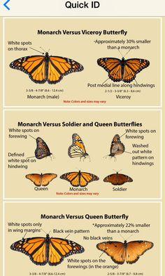 Naturedigger's Monarch SOS app