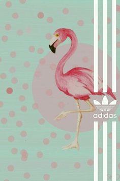 Adidas wallpaper flamingo summer dots