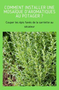 Decoration Plante, Plantation, Permaculture, Herbs, Gardening, Inspiration, Garden, Veggie Gardens, Ears Of Corn