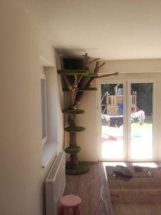 Windows, Tree Structure, Luxury, Ramen, Window