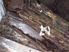 Termite Inspection Charlotte Home
