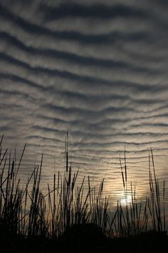 Sunset & altocumulus clouds over the Everglades Skier, Sky And Clouds, Nature Scenes, Amazing Nature, Beautiful World, That Way, Science Nature, Cosmos, Mother Nature