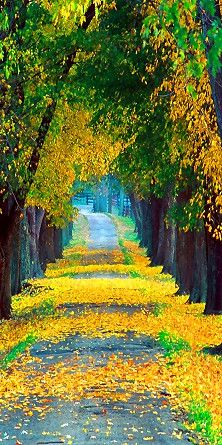 autumn road ♥ simply beautiful ღ Beautiful World, Beautiful Places, Beautiful Pictures, Beautiful Roads, Beautiful Beautiful, Wonderful Places, All Nature, Mellow Yellow, Color Yellow