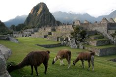 Top 10 things to do in Peru. Luxury tailor made travel to Peru with Latin odyssey. Peru Holidays and adventure in Peru. Peru honeymoons created around you. Huayna Picchu, Monuments, Stuff To Do, Things To Do, Guatemala, Peru Travel, Flora And Fauna, Adventure