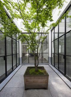 Patio Architecture Minimal Courtyards With Just A Hint Of Nature. Two Modern Patio Ideas Turning Small Backyard Designs Into . Indoor Courtyard, Internal Courtyard, Courtyard Gardens, Indoor Trees, Indoor Outdoor, Outdoor Patios, Potted Trees, Outdoor Rooms, Outdoor Living