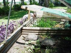 How to Build a Basic Outdoor Tortoise Pen