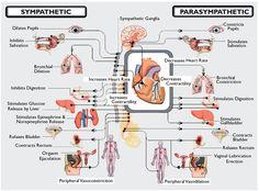 LifeSciTRC org   Search Results Nursing Mnemonics and Tips  Autonomic Nervous System Response
