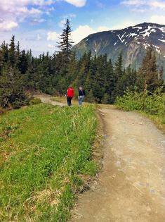 Let's take a ride on the Mount Roberts Tramway in Juneau. Find out what you can expect when hiking the trails on Mount Roberts. Juneau Alaska, Alaska Travel, Alpine Loop, Sitka Spruce, Get Tickets, Travel Planner, Hiking Trails, Cruise, Walking