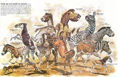 Image result for prehistoric cervids