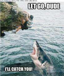 Never trust a shark