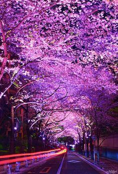 "lifeisverybeautiful: ""The Four seasons of Japan """