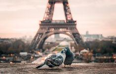 Love Images, Love Pictures, Paris Pictures, Images Photos, Paris Torre Eiffel, Rio Sena, 4 Days In Paris, Paris Secret, Gustave Eiffel