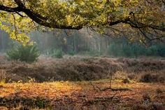 Afbeeldingsresultaat voor herfstfotos