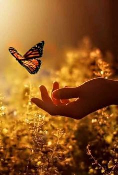 scenery photos with a butterfly - Bing images Jolie Photo, Beautiful Butterflies, Butterflies Flying, Beautiful Creatures, Beautiful World, Mother Nature, Nature Photography, Beautiful Pictures, Scenery