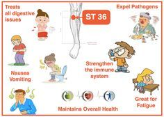 ST 36 is probably the most used point in clinical practice. Commander point, He-Sea point, Lower He-Sea point, Earth Point, Sea of Water & Grain. It tonifies Qi & Blood, expel pathogens, strengthen Wei Qi, Harmonize ST & SP and all digestive issues, and maintains overall health!