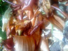 Komposztálás lustáknak - Ökoritmus Celery, Vegetables, Food, Essen, Vegetable Recipes, Meals, Yemek, Veggies, Eten