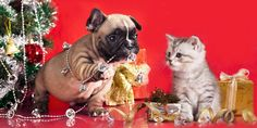 How To Give Pets As Gifts