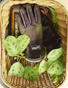 Market ride with my favorite gloves, my favorite book and my new plant! Cocoa Cycling Gloves from Elite-Gloves.