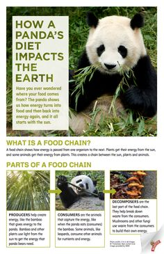 Free Food Chain Classroom Poster: How a Panda's Diet Impacts the Earth