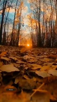 Cool Pictures Of Nature, Beautiful Photos Of Nature, Beautiful Nature Wallpaper, Amazing Nature, Forest Photography, Landscape Photography, Nature Film, Photographie Portrait Inspiration, 3d Video