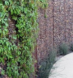 gabion wall, Ten Eyck Landscape Architects Inc What plants will grow on gabion? Bougainvillea maybe?
